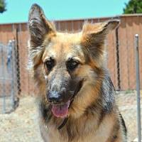 Adopt A Pet :: Topaz - San Diego, CA