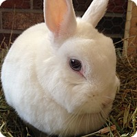 Adopt A Pet :: Saphira - Williston, FL