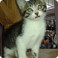 Adopt A Pet :: Cash - Whittier, CA