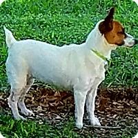Adopt A Pet :: AVA - Terra Ceia, FL