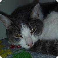 Adopt A Pet :: Louie - Hamburg, NY