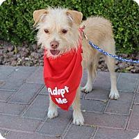 Adopt A Pet :: LOKI - Las Vegas, NV