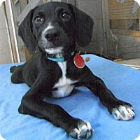 Adopt A Pet :: Jamaica - Bedminster, NJ