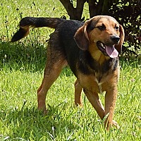 Adopt A Pet :: Beatrice (25 lb) New Pic/Video - Twinsburg, OH