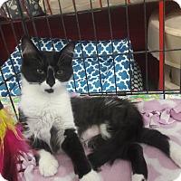 Adopt A Pet :: Siera - Alamo, CA