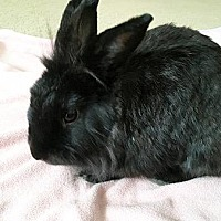 Adopt A Pet :: Twyla - Scotts Valley, CA