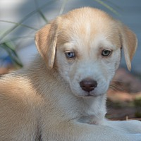 Adopt A Pet :: Chandra~adopted! - Southbury, CT