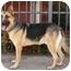 Photo 4 - German Shepherd Dog Mix Dog for adoption in Los Angeles, California - Jerry Lee von Kern