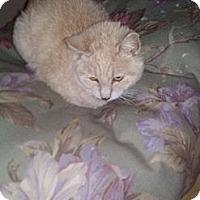 Adopt A Pet :: Remy - Tarboro, NC