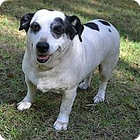Adopt A Pet :: Lewis - Newport, VT