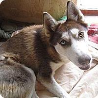 Adopt A Pet :: Lyric - Santa Fe, NM