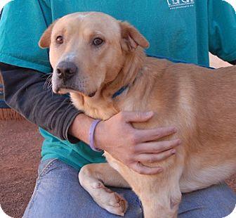 Labrador Retriever Mix Dog for adoption in Las Vegas, Nevada - Marshall