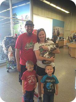 Domestic Mediumhair Cat for adoption in Odessa, Texas - Chloe