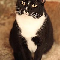 Adopt A Pet :: HINKY - Bronx, NY