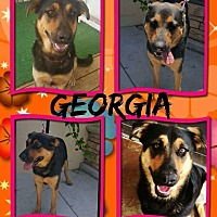 Adopt A Pet :: Georgia - Winchester, CA
