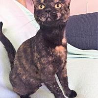 Adopt A Pet :: Randi - Cambridge, MD