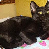 Adopt A Pet :: Bob - Winchester, CA