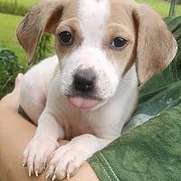 Adopt A Pet :: SAILOR MOON-ADOPTED - Cranston, RI