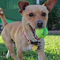 Adopt A Pet :: Spencer - Encino, CA