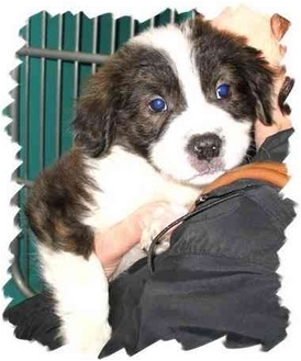 Terrier (Unknown Type, Medium) Mix Puppy for adoption in Peconic, New York - Puppies! Puppies!