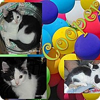 Adopt A Pet :: Cooper - Washington, DC