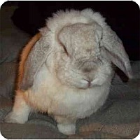 Adopt A Pet :: Lila - Santee, CA
