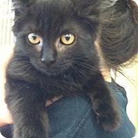 Adopt A Pet :: Boo Boo - Riverhead, NY
