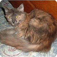 Adopt A Pet :: Sasha - Troy, OH