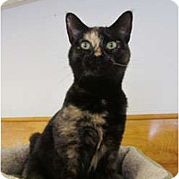 Adopt A Pet :: Petunia - Pascoag, RI
