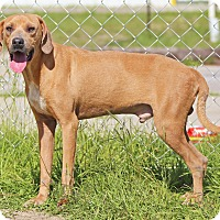 Adopt A Pet :: Sammy - Orange Lake, FL