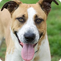 Adopt A Pet :: Petey - Knoxville, TN