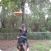 Adopt A Pet :: Hercules - Green Cove Springs, FL