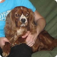 Adopt A Pet :: Scarlett - Greenville, RI