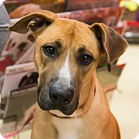 Adopt A Pet :: Lola - Grass Valley, CA