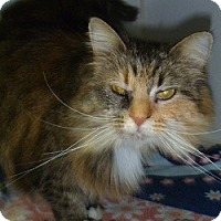 Adopt A Pet :: Victoria Lee - Hamburg, NY