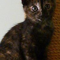 Adopt A Pet :: Tootsie - Budd Lake, NJ