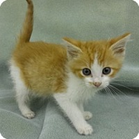 Adopt A Pet :: Bo - Olive Branch, MS