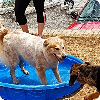 Adopt A Pet :: Lulu - House Springs, MO