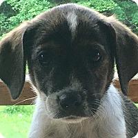 Adopt A Pet :: Teal - Staunton, VA