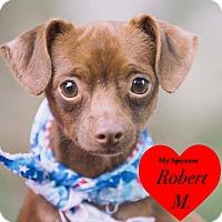 Adopt A Pet :: Maxwell - San Leon, TX