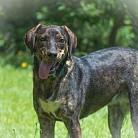 Adopt A Pet :: Daisey - Walton County, GA