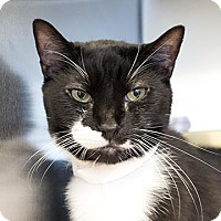 Adopt A Pet :: Monkey - Richmond, VA