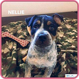 Blue Heeler/Labrador Retriever Mix Puppy for adoption in DeForest, Wisconsin - Nellie