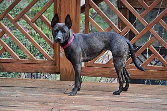 Shepherd (Unknown Type)/Terrier (Unknown Type, Medium) Mix Dog for adoption in Bogart, Georgia - Shenzi