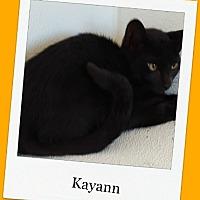 Adopt A Pet :: Kayann - Tombstone, AZ