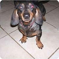 Adopt A Pet :: ELVIS - SCOTTSDALE, AZ