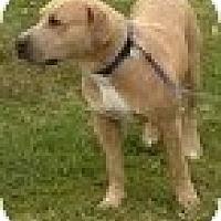Adopt A Pet :: Hector - justin, TX