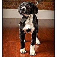 Adopt A Pet :: Oscar - Owensboro, KY