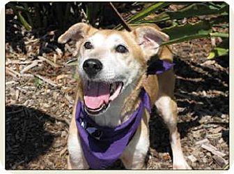 Labrador Retriever Mix Dog for adoption in El Cajon, California - Chiquita