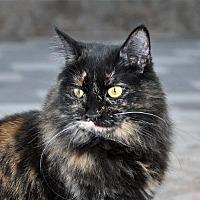 Adopt A Pet :: Zumba - Alamogordo, NM